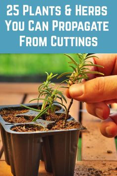 Grow brand new plants for free from cuttings. Here's a tutorial for 25 of the most popular. art design landspacing to plant Growing Vegetables, Growing Plants, Shade Garden, Garden Plants, Garden Shrubs, Container Gardening, Gardening Tips, Hydroponic Gardening, Vegetable Garden Design