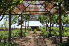 Round Pound Winery Garden, Rutherford, CA (Napa Valley) www.eddie-hernandez.com