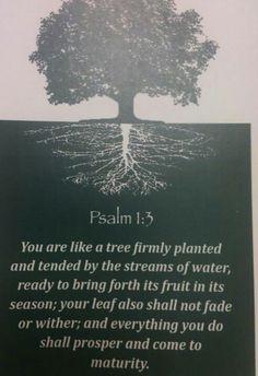 Tree of life bible scriptures 25 Ideas Bible Verses Quotes, Bible Scriptures, Jesus Quotes, Psalm 1, Prayer Warrior, Spiritual Inspiration, Word Of God, Thy Word, God Is Good