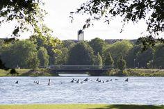 #Kiel Eine beliebte Installation – bei den Fußgängern genauso wie bei den Seevögeln – ist das Schwimmobjekt, das alljährlich in den Sommermonaten im Wasser des Kleinen Kiels treibt. 27 geometrisch geform...