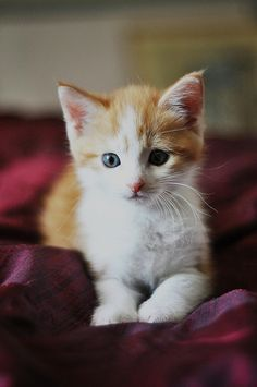 """""""Kittens are angels with whiskers."""" --Jerry Smith"""