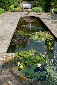 Would it be possible to have a round pond, with a square planter with some sort of tree in the centre, thus mimicking the shape of a Chinese coin? One can always dream. While I'm at it, I may as well pretend this pond is in the middle of a walled Oriental garden...