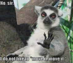 Nope. i do not like to move it move it lol