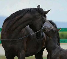 Love! Beautiful horses!!