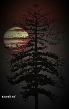 Luna Moon, Sky Moon, Painting On Wood, Wood Paintings, Moon Magic, Sun And Stars, Moon Lovers, Super Moon, Beautiful Moon