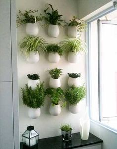Mur végétal de plantes aromatiques dans une cuisine