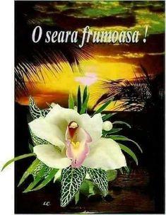 Good Night, Motivation, Plants, Facebook, Beauty, Slip On, Pictures, Nighty Night, Plant