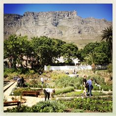 """See 38 photos and 6 tips from 119 visitors to Oranjezicht City Farm. """"Fresh vegetables from the garden. A view second to none. City Farm, Peaceful Life, Most Beautiful Cities, Cape Town, Just Go, Farms, South Africa, Places To Go, Dolores Park"""