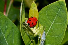 Ladybug by Robert Schwartz on 500px