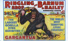 gargantua the great, buddy, gorilla, ringling bros and barnum & bailey