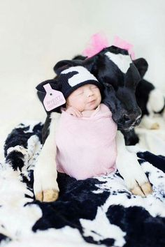 Fb site Cows  are  Awesome  This is the cutest photo ever!!! Rosalynn Griffin's newborn daughter Ryeitt and their calf Elvis.They're both 3 days old! Thanks for sharing with us!