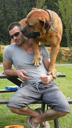 Top Five Family Guard Dog Breeds . looks like my Lily somewhat, one of our Guard Dogs but with me since I lost my BEST FRIEND Scruffy Huge Dog Breeds, Guard Dog Breeds, Huge Dogs, Giant Dogs, Beautiful Dogs, Animals Beautiful, South African Boerboel, Animals And Pets, Cute Animals