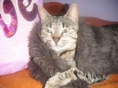 La gatita de Valeria. Vótalo o participa tú también: https://basicfront.easypromosapp.com/p/122526