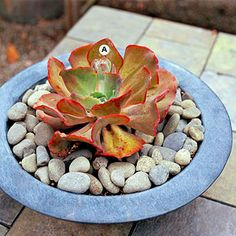 Try the Minimalist Look-  click for container Garden ideas
