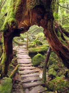allée de jardin en traverses de bois usé, grosses pierres décoratives et…