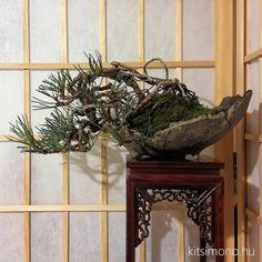 Bonsai, Plants, Plant, Planets, String Garden
