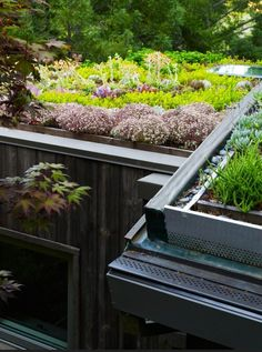 Green Roof and Landscape Architecture - Jori Hook The clients for the Mill Valley Cabins wished to add some accessory structures to their existing hillside . Green Architecture, Landscape Architecture, Landscape Design, Garden Design, Sustainable Architecture, Residential Architecture, Contemporary Architecture, Pavilion Architecture, Sedum Roof