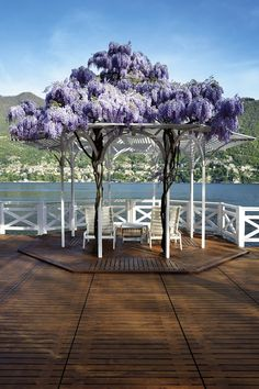 Beautiful Pergola with wisteria at Lake Como - Italy.