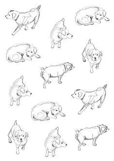 Dog sketch via Kid's Book Design