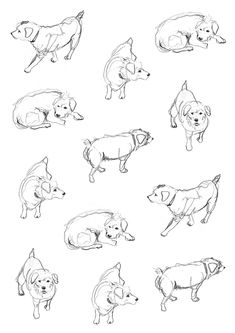 Dog sketch via Kid's Book Design