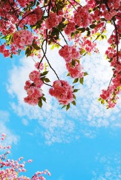 [Blog] Celebrate Springtime with the DC Cherry Blossom Festival #travel #discount