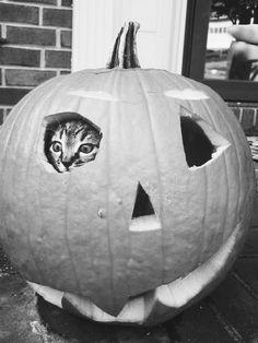 Boo! Tá fixe para o hallowen