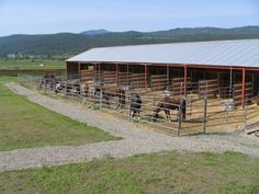 One of a kind Northeast Washington horse ranch! World class facility is complete… Cattle Barn, Hay Barn, Barn Stalls, Horse Stalls, Horse Farm Layout, Barn Layout, Rinder Stall, Small Horse Barns, Horse Pens