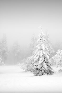 Ode to Things | White Christmas Style