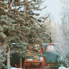 Cabins covered by trees and snow✨