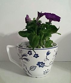 Mother's day gift idea. Flowers planted in a tea cup.