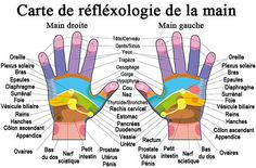 Buy Hand Reflexology Chart Description by PeterHermesFurian on GraphicRiver. Hand reflexology chart with accurate description of the corresponding internal organs and body parts. Reflexology Benefits, Reflexology Massage, Massage Benefits, Oil Benefits, Health Benefits, Essential Oil On Feet, Essential Oils, Pressure Points For Headaches, Pressure Points On Hands