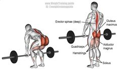 Barbell deadlift. A major compound exercise! Target muscles: Gluteus Maximus and Erector Spinae. Synergists: Quadriceps, Hamstrings, Adductor Magnus, Soleus, Latissimus Dorsi, Wrist Flexors (the latter two only if you lift heavy). Numerous other muscles throughout body act as stabilizers.