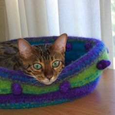 One of a kind kitten bed...