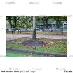 Park Benches Photo Poster