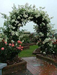 Beautiful arbor and climbing roses.