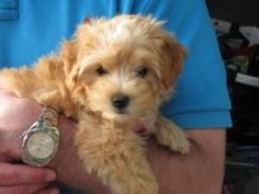 One of your fluffy puppies! Be sure to vote in the Pet Contest by 4/25!