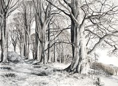 Pamela Grace is an artist and printmaker living and working in Galloway. Her work is based on drawing - realised in pen and ink wash, etchings and solar-plate etchings Ink Pen Drawings, Drawing Sketches, Nature Sketches Pencil, Landscape Drawings, Drawing Practice, Illustration Art, Nature Illustrations, Ink Art, Printmaking