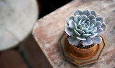 15 plantas pequeñas con encanto