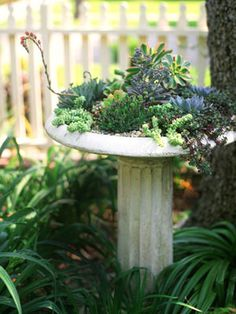 Hardy succulents, which stow water in their stems and leaves, thrive in a shallow birdbath perch. Pebbles — to hold more moisture in the soil — add to the desert-landscape look.