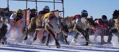 Watching Rudolph run in Finnish Lapland - thisisFINLAND