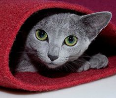 """""""A cat who is determined not to be found can fold itself up like a pocket handkerchief if it wants to."""" --Louis J Camuti"""