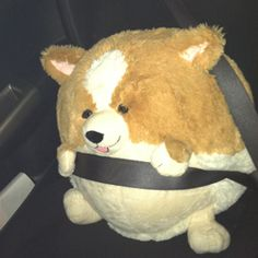 Squishable Corgi going for a ride! #squishable #fan