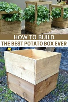 How To Build The Best Potato Box Ever - - Growing potatoes in a box may seem weird and lot of effort but actually can double and even quadruple your potato yield. Growing potatoes in a box is just like planting in a raised bed. Raised Vegetable Gardens, Veg Garden, Garden Boxes, Edible Garden, Raised Garden Beds, Raised Beds, Vegetable Gardening, Garden Ideas, Diy Garden Box