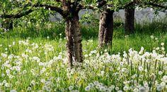 """Не все растения на участке могут существовать """"в мире и согласии""""."""
