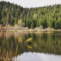 #lake #tó #bányató #erdő #erdővidék #erdély #székelyföld #transilvania #ősz #fallvibes #fall #herbst #herbstlich #természetfotó #természet #naturelove #naturephotography #natureliebe #nature #wunderfulnature