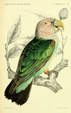 Resultado de imagem para edward lear les parrots