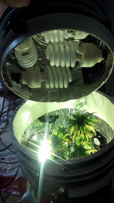 A view of an open Space Bucket with lights on top and plants underneath. This bucketeer used extra large CFLS, so his plants get lots of additional light. Remember, when adding large lights like this, you need to add more/bigger fans to vent out all the extra heat. More info: http://www.growweedeasy.com/marijuana-space-buckets