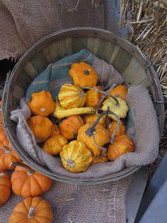 Gourds in basket