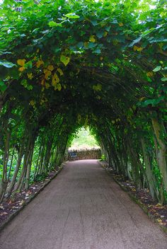 Light at the End of the Tunnel at Hidcote Manor Garden by antonychammond, via Flickr