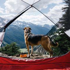 campbrandgoods:  A doggone perfect morning #campbrandgoods #keepitwildPhoto by: @sam__davis.